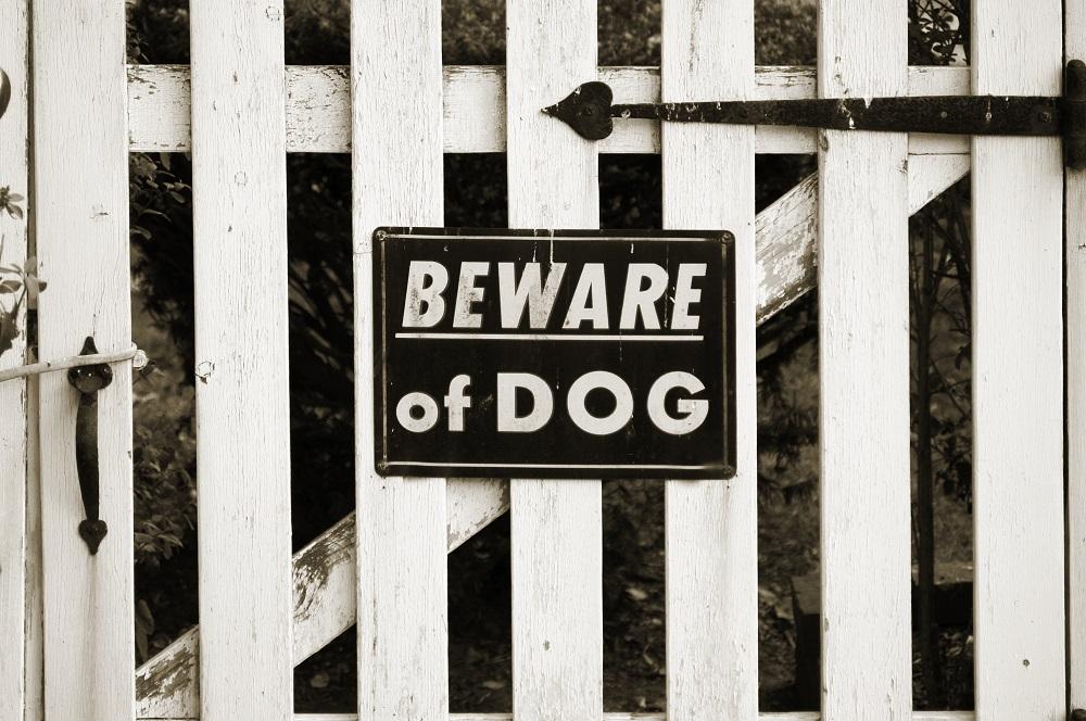 Dogs Trust Dog Fear Survey